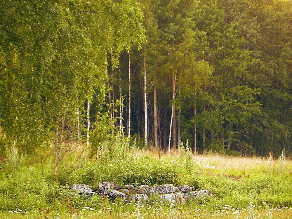 ธรรมชาติ, ป่า, ภูมิทัศน์