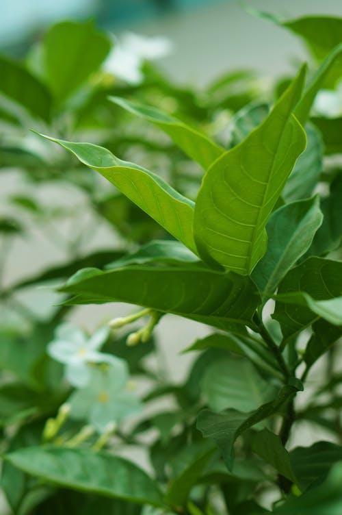 Gratis stockfoto met bloem, groen, klein, natuurlijk