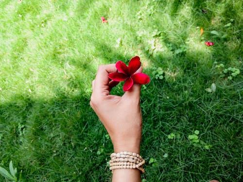 Gratis lagerfoto af blomst, blomsterhave, grøn, hånd