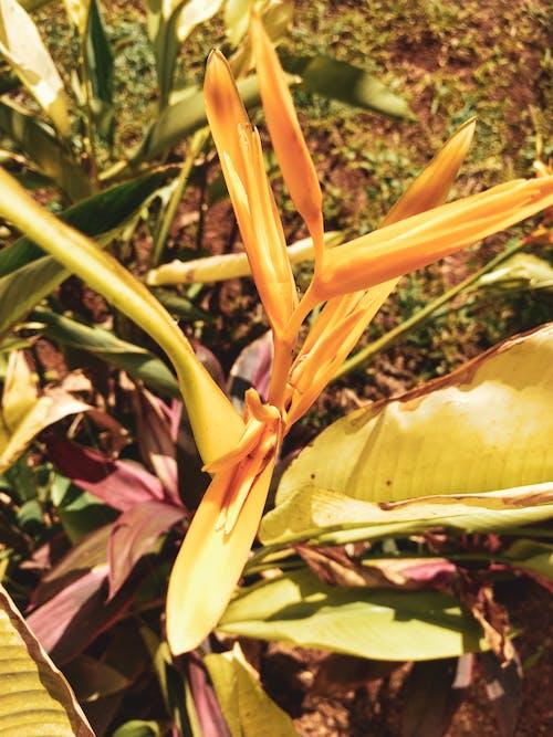 Gratis lagerfoto af blomster, fjeder, gul, have