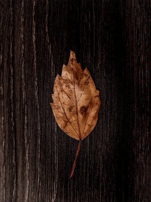Brown Leaf on a wooden plank