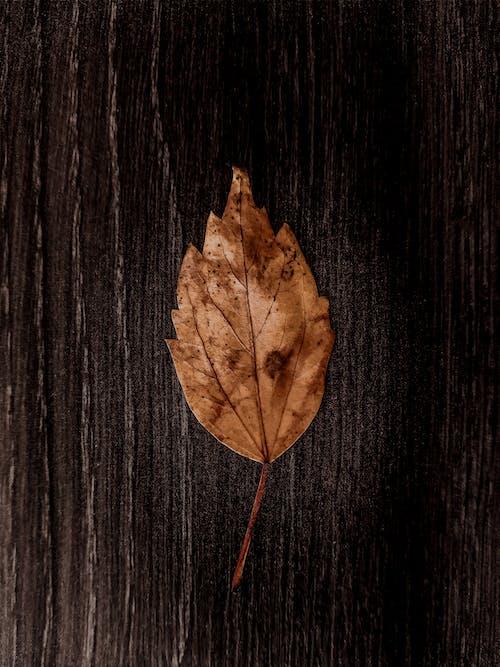 Foto stok gratis abstrak, daun, daun daun, daun kering