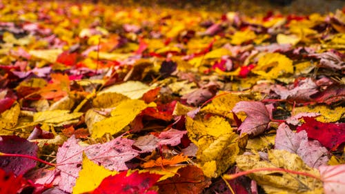 Free stock photo of autumn, camping, carpet, climb