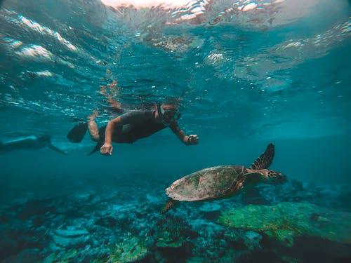 Man Snorkeling While Looking at Ocean Turtle