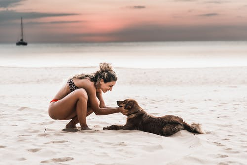 Woman Wearing Bikini Petting the Dog at the Beach