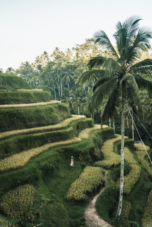 Person Standing on Rice Terraces