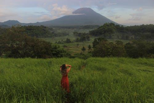 Imagine de stoc gratuită din arbori, aventură, călătorie, câmp