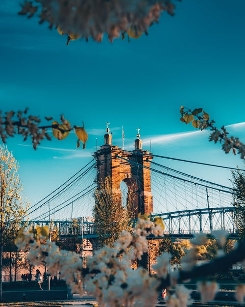 Kostnadsfri bild av arkitektur, blommor, dagsljus, förbindelse