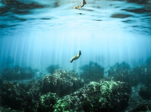 Kostenloses Stock Foto zu abenteuer, draußen, korallen, marine