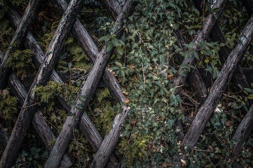 Green Plants Near Wooden Fence