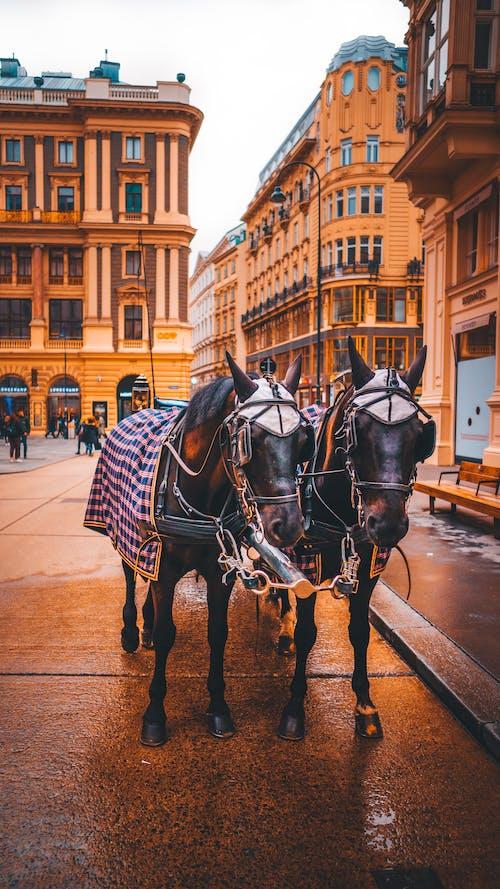 Δωρεάν στοκ φωτογραφιών με άλογα, αρχιτεκτονική, αστικός, ζώα