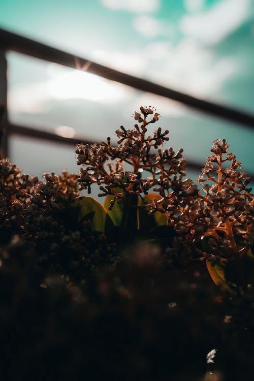 Foto stok gratis keindahan di alam