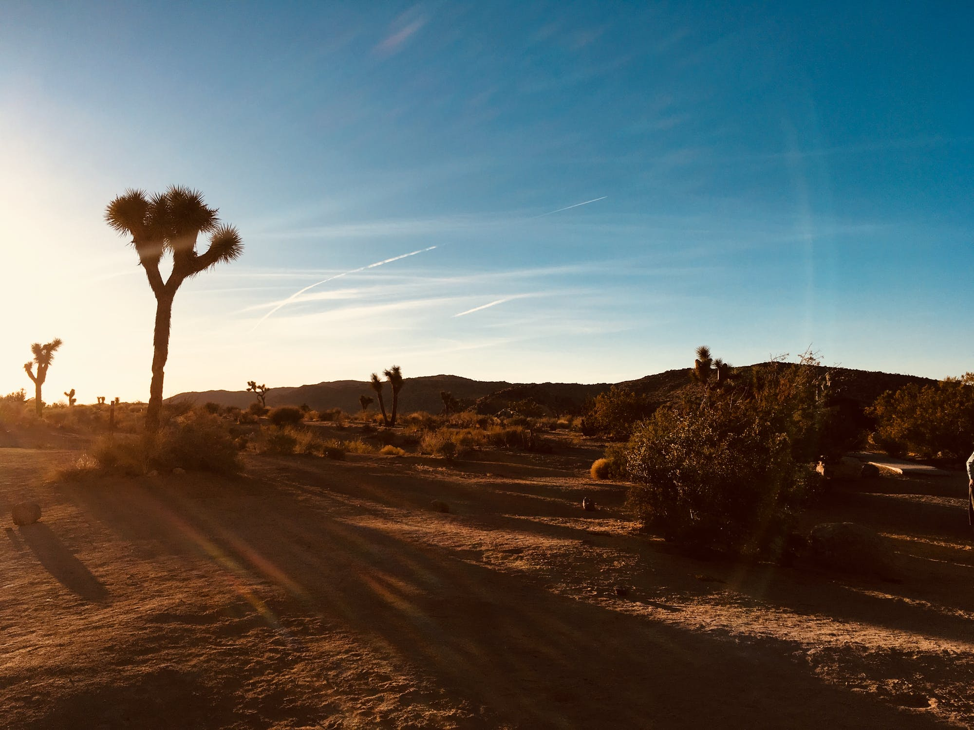 California Officials Recommend Endangerment Listing for Joshua Trees
