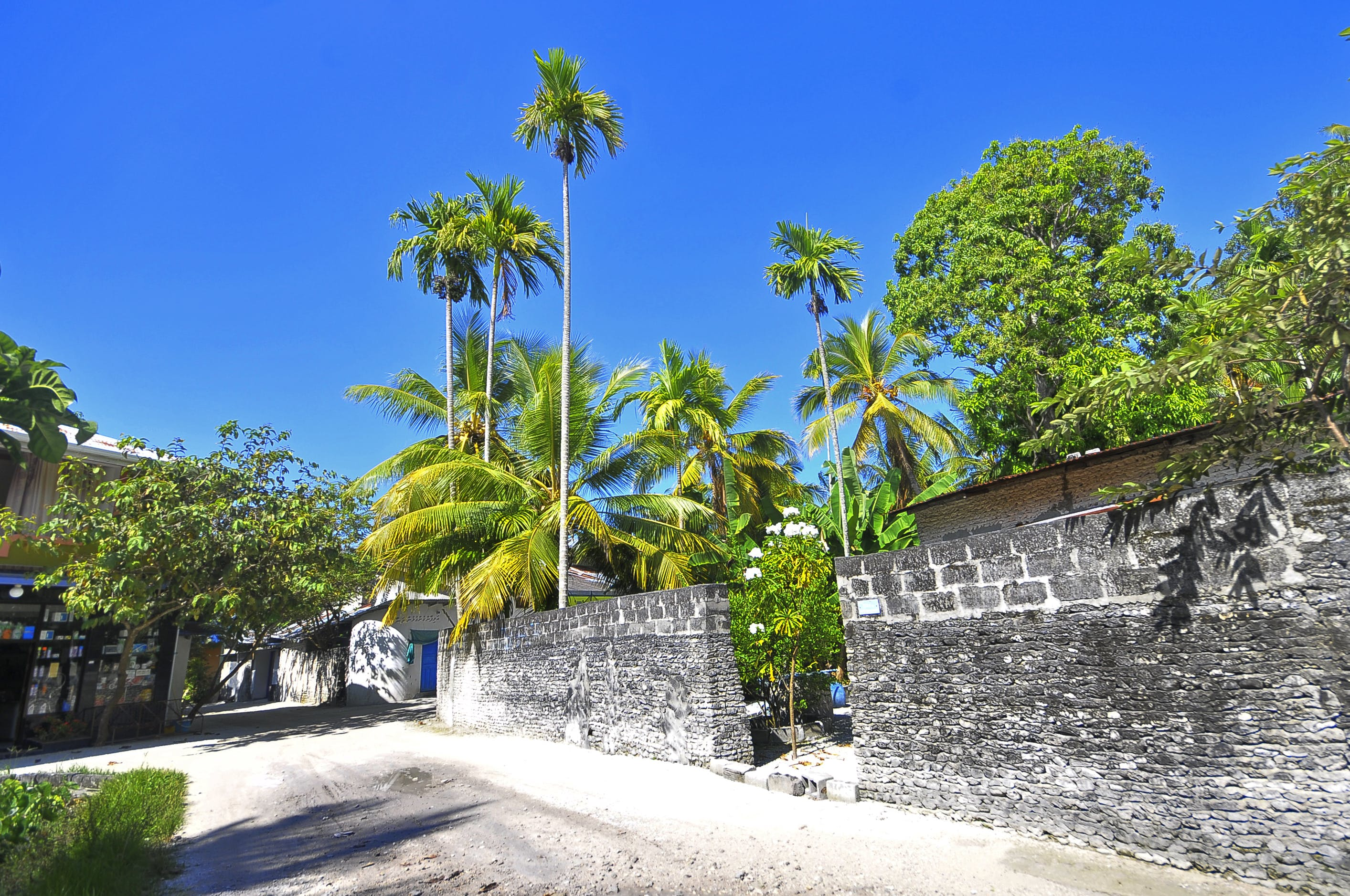 Coconut Trees Inside the Concrete Wall