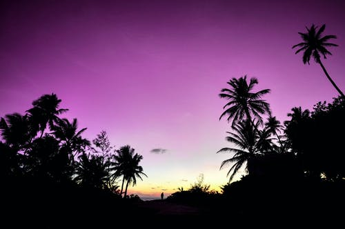 Silhouette of Trees Under Calm Purple Sky