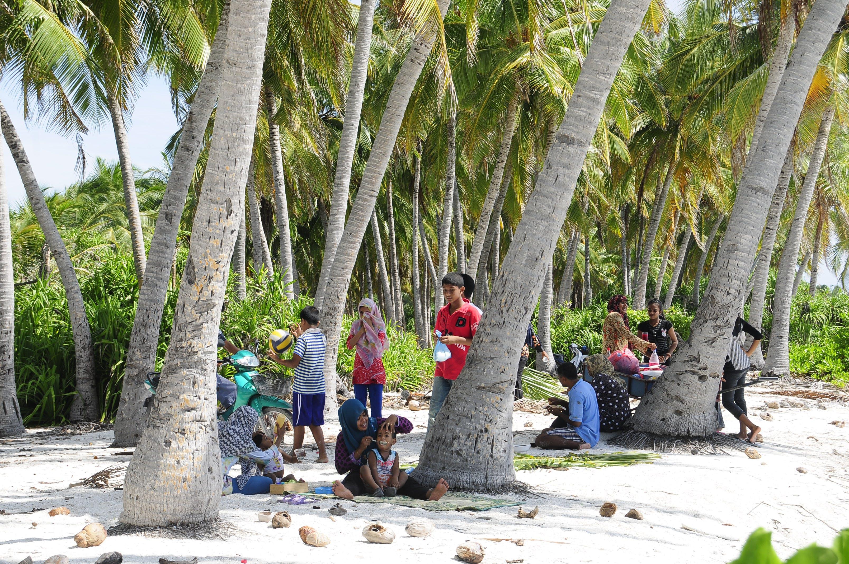 drzewa, dzieci, kokosy