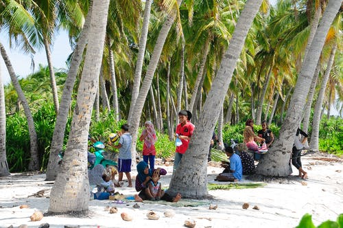 People Sitting and Standing Under Coconut Tree