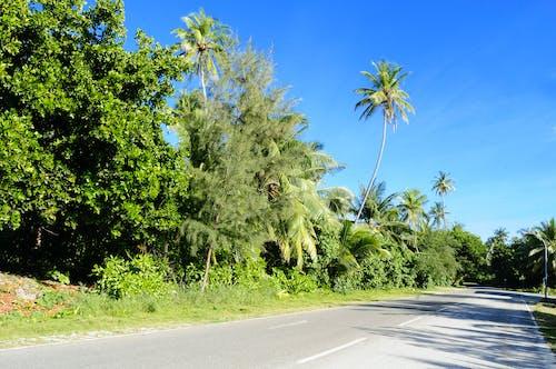Darmowe zdjęcie z galerii z droga, drzewa, kraj, krajobraz