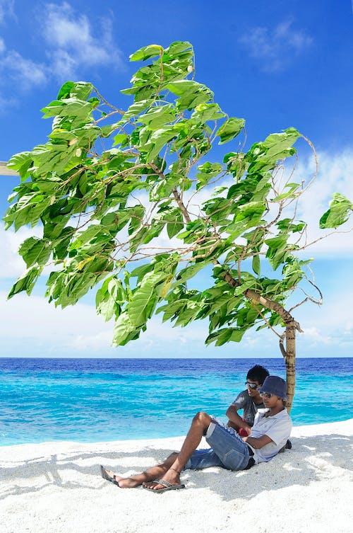 Foto profissional grátis de água, areia, árvore, beira-mar