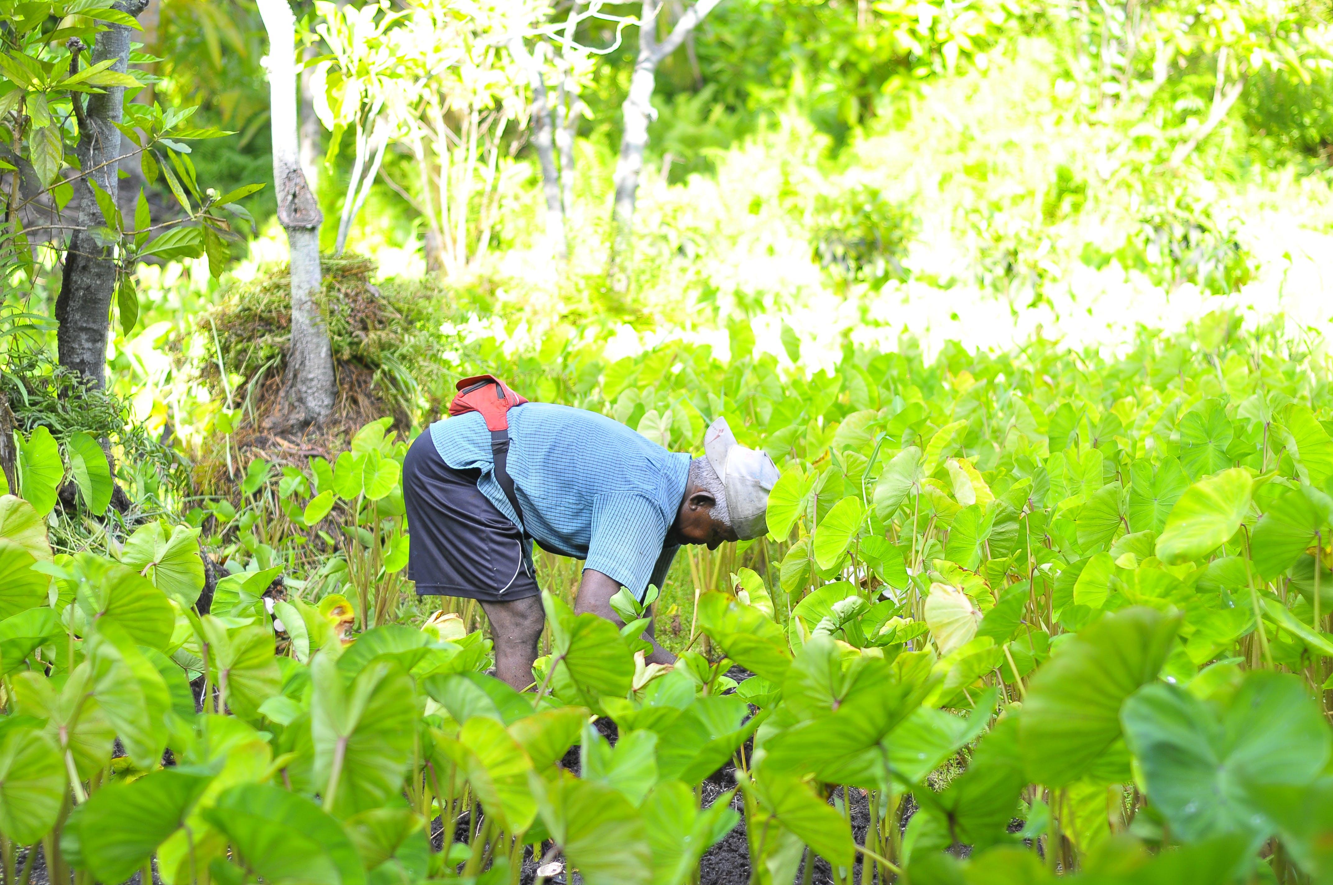 Kostnadsfri bild av arbetssätt, bondgård, gräs, grön