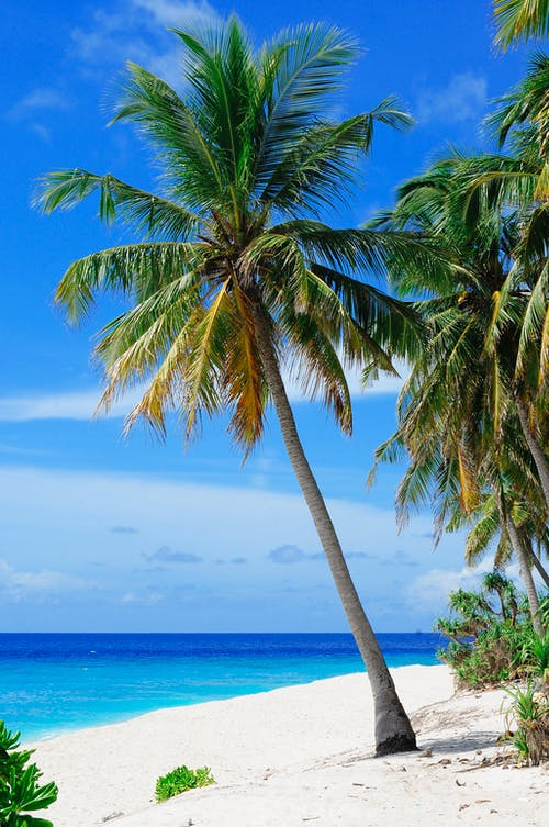 Coconut Tree Near Body of Water Under Blue Sky