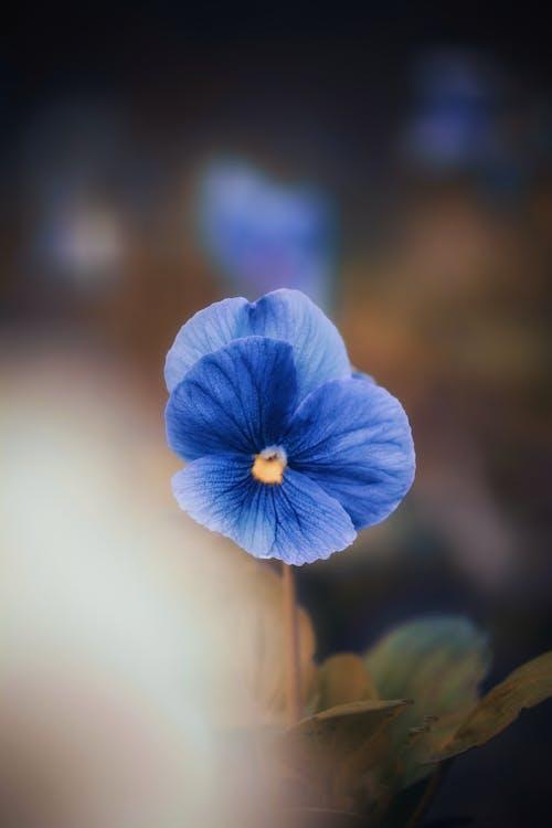 Gratis lagerfoto af blå, blad, blomst, blomster
