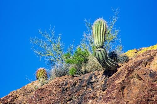 Gratis stockfoto met amerika, apache lake, blauwe lucht, cactus