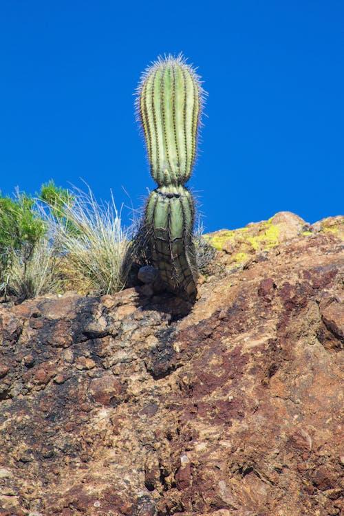 Základová fotografie zdarma na téma apache lake, arizona, hory, kaktus
