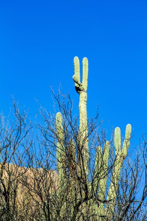 Ảnh lưu trữ miễn phí về arizona, cây xương rồng, hồ apache, ký hiệu hòa bình