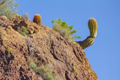 Ảnh lưu trữ miễn phí về arizona, cây xương rồng, hồ apache, Sa mạc