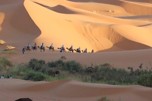 Free stock photo of marokko
