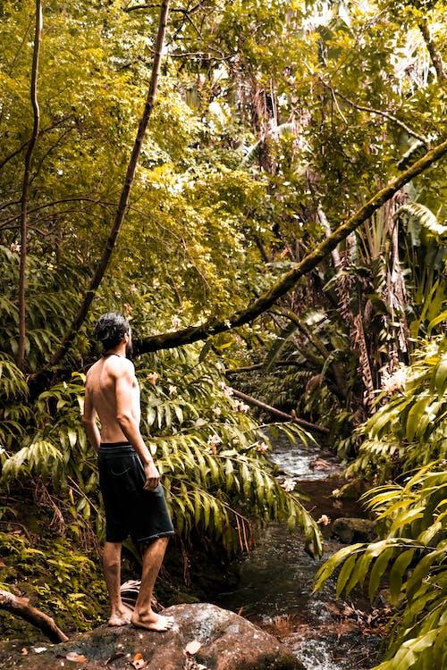 Photos gratuites de arbres, aventure, forêt, forêt tropicale