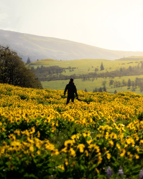 açık hava, alan, arazi, bitki içeren Ücretsiz stok fotoğraf