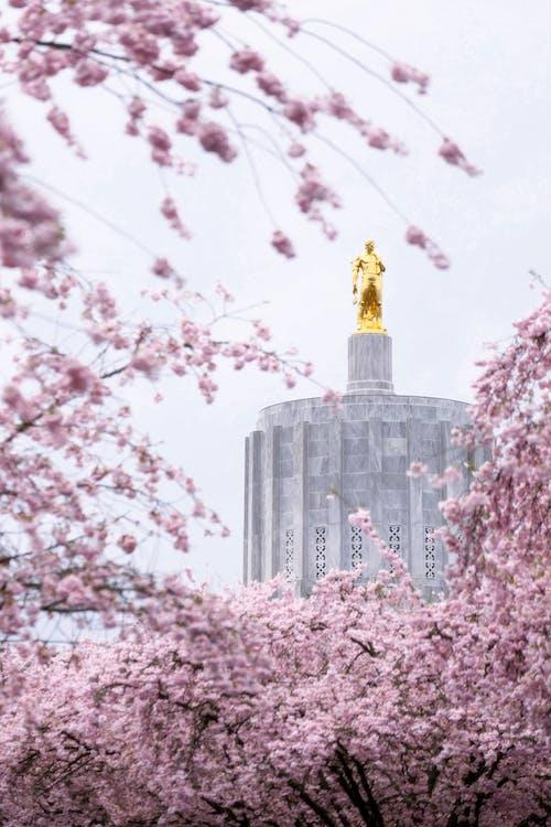 açık hava, ağaçlar, ahşap, altın heykel içeren Ücretsiz stok fotoğraf