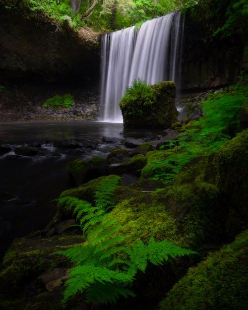 Fotobanka sbezplatnými fotkami na tému dažďový prales, kaskáda, papraď, príroda