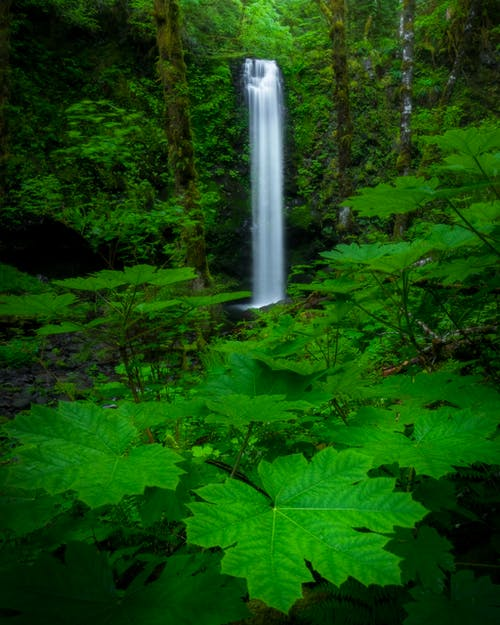 Waterfalls Surrounded By Green Plants