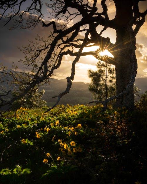 Photo of Tree Near Sunflowers