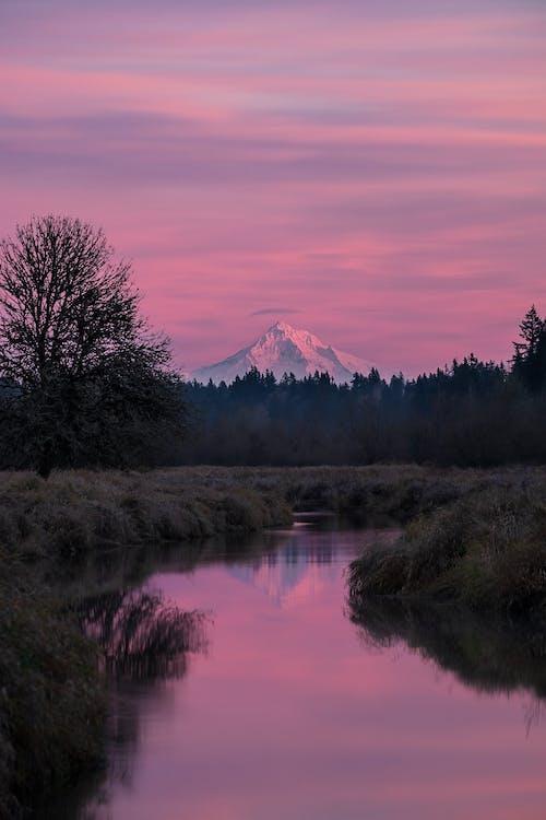 açık hava, ağaçlar, akşam karanlığı, altın saat içeren Ücretsiz stok fotoğraf
