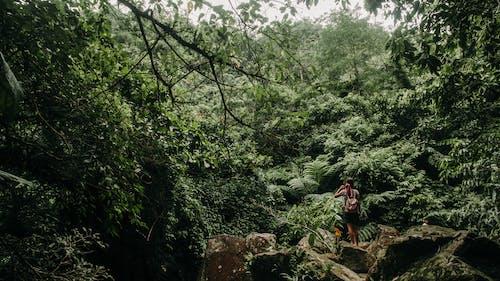 Ảnh lưu trữ miễn phí về ánh sáng ban ngày, cây, cây xanh, cuộc phiêu lưu