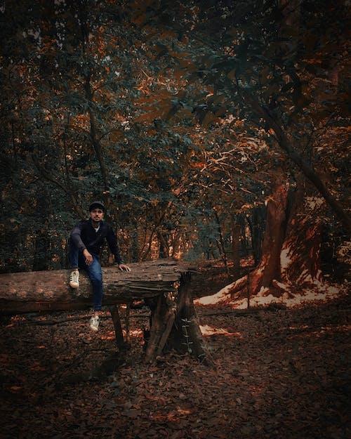 Immagine gratuita di alba, alberi, alla ricerca, autunno