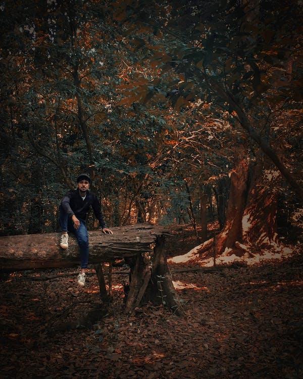 alba, alberi, alla ricerca