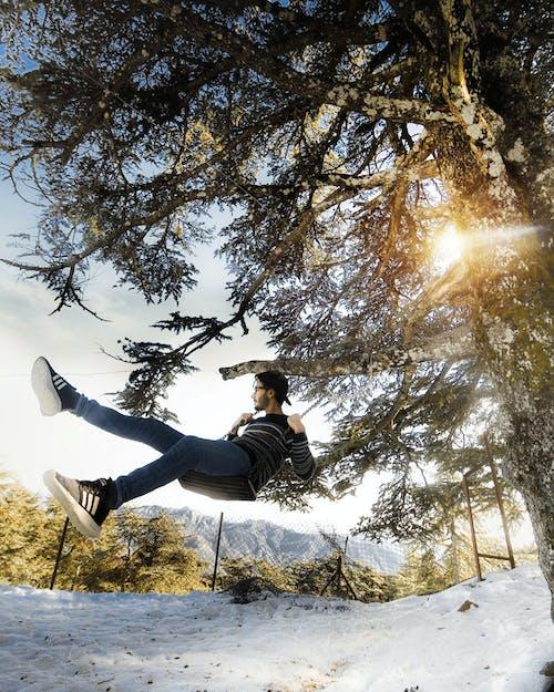 Foto d'estoc gratuïta de arbre, balancejar, branques, constipat