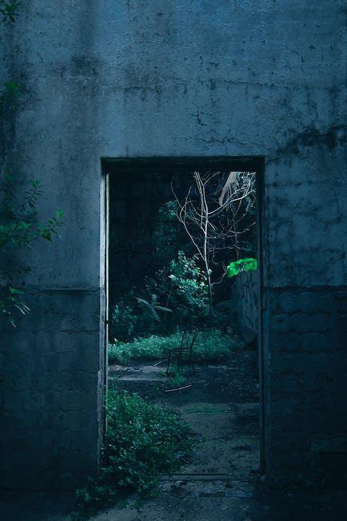 Imagine de stoc gratuită din Argentina, beton, intrare, perete