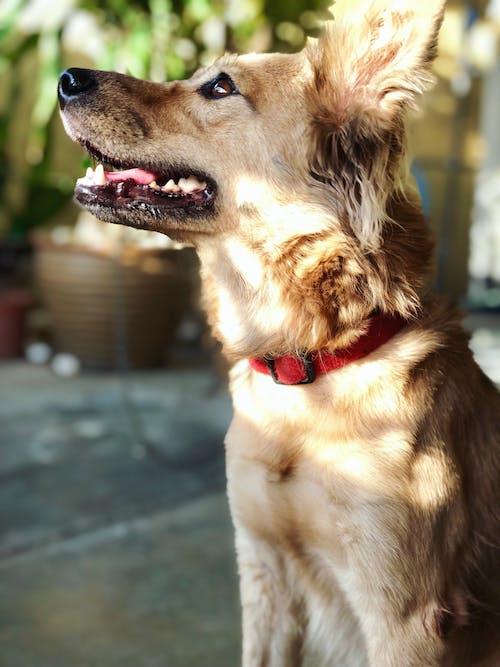 動物, 動物攝影, 動物的鼻子, 可愛 的 免费素材照片