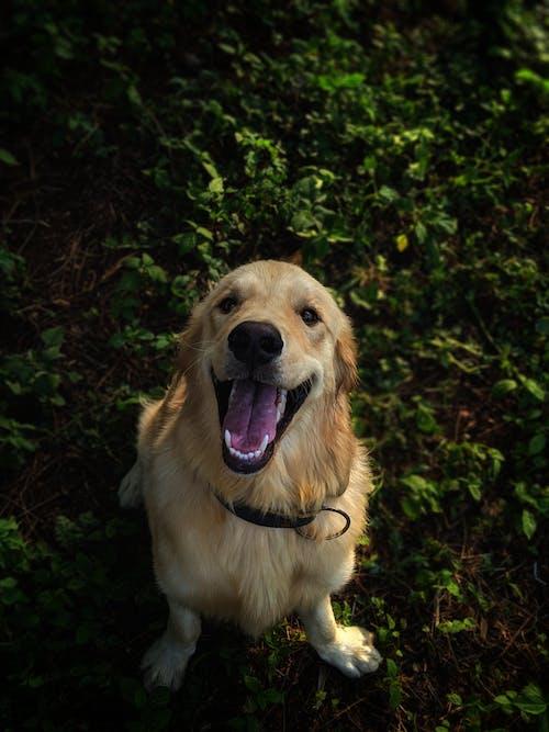 Fotos de stock gratuitas de al aire libre, animal, animal domestico, canidae