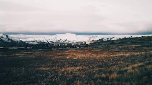 Fotos de stock gratuitas de al aire libre, campo, campo de hierba, césped