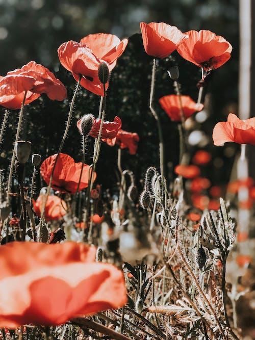 계절성, 꽃, 꽃이 피는, 꽃잎의 무료 스톡 사진
