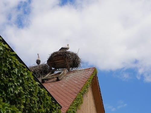 Free stock photo of animals, bird, bird's nest, nature