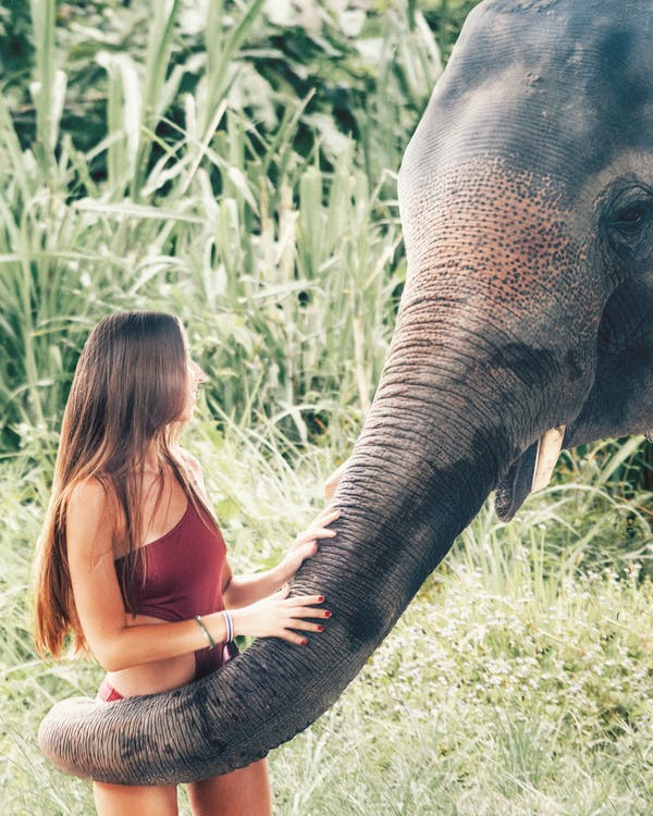 Photo of Smiling Woman in Swimsuit Wrapped in Elephants Trunk