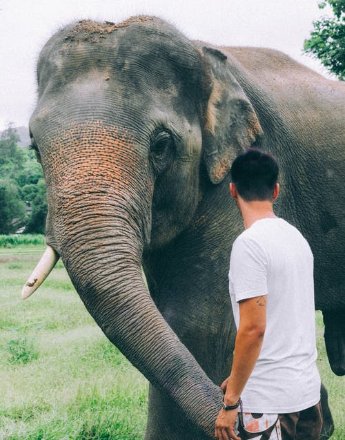 Back View Photo of Man Standing Beside Gray Elephant
